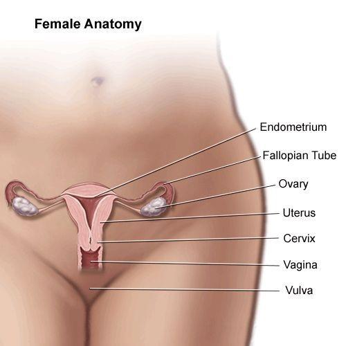 Ont i äggstockarna innan ägglossning